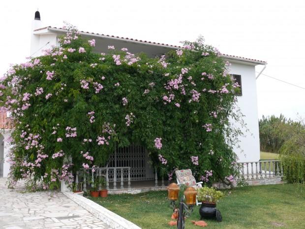 Huis onder bloemenzee